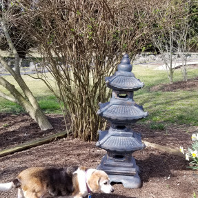 hot rod zen garden