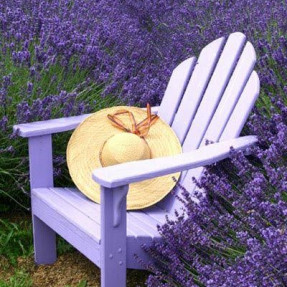 photo lavender background chair hat